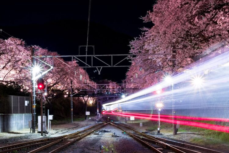山北鉄道公園-光の桜