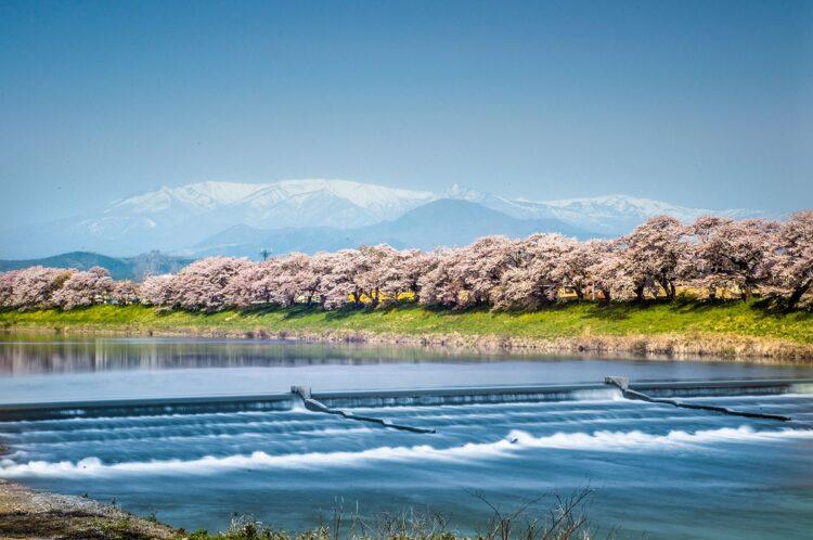 白石川堤一目千本桜1
